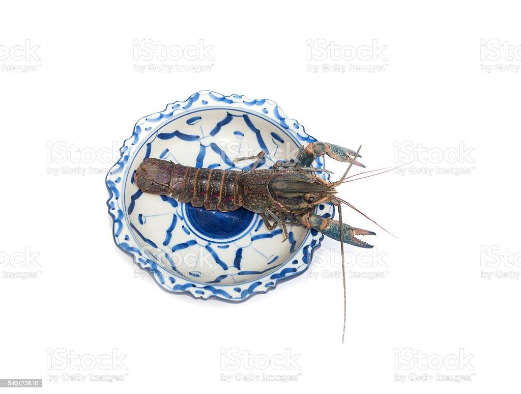 Australian blue crayfish Cherax quadricarinatus in plate stock photo