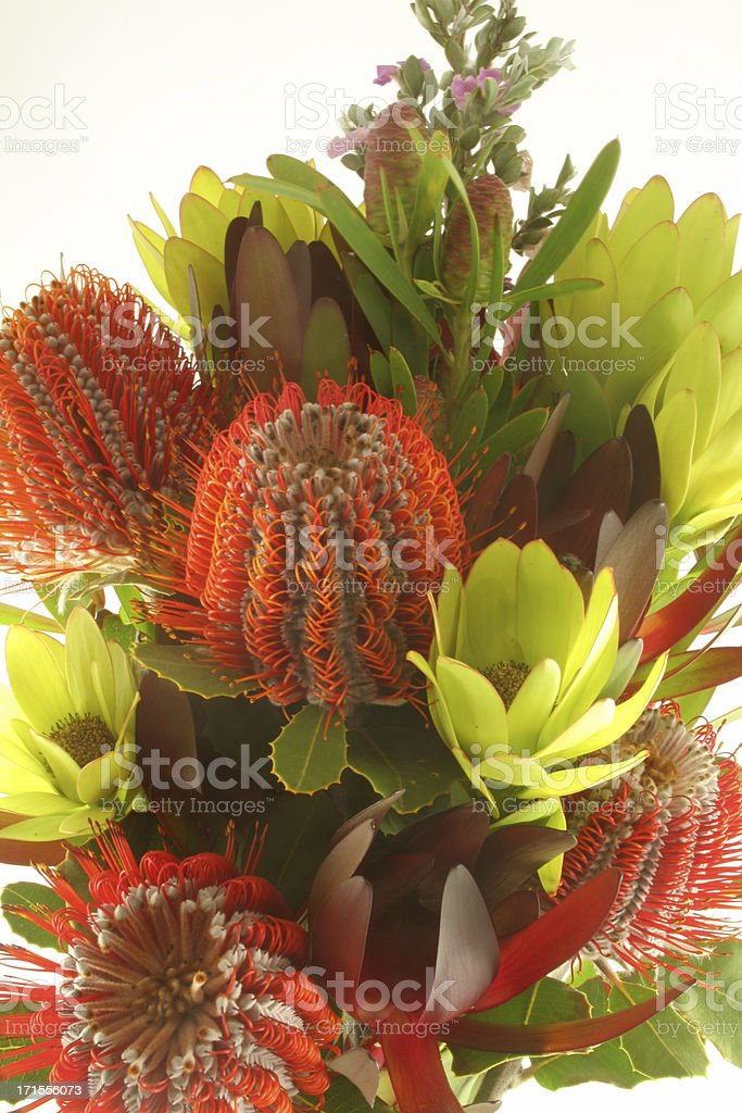 Australian bouquet high key royalty-free stock photo