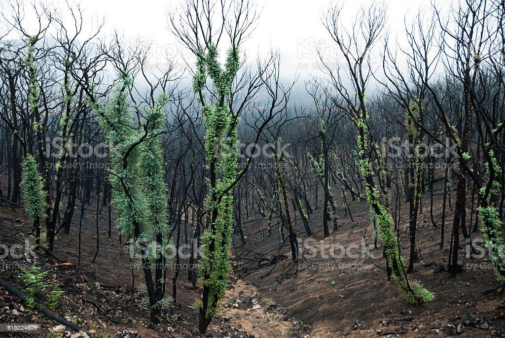 Australian Bush Fires stock photo