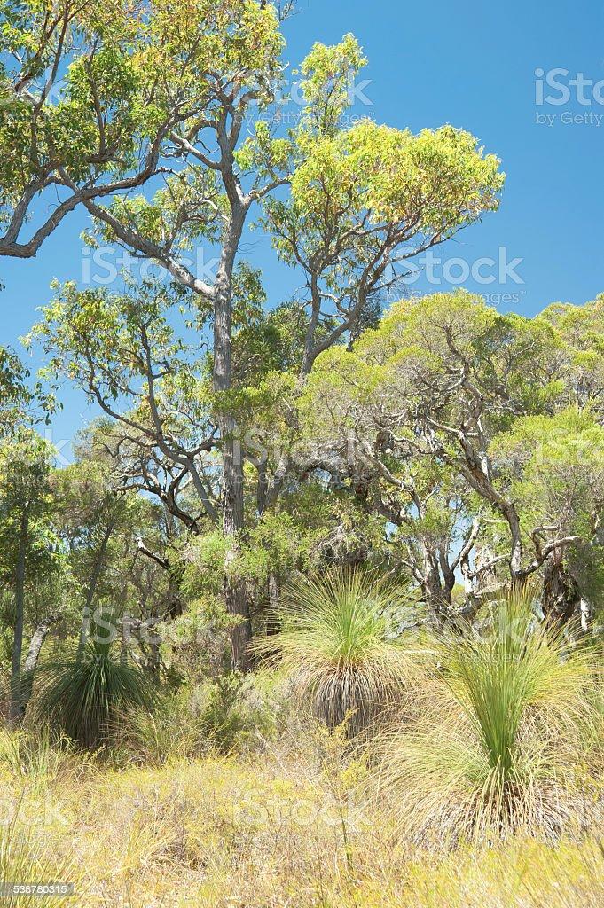 Australian Bush stock photo