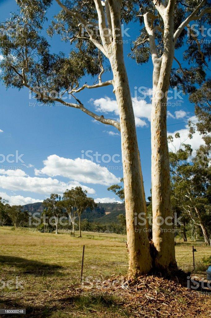 Australian country scene royalty-free stock photo