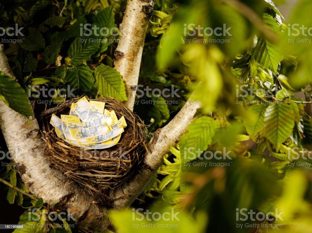 Australian Dollars in a Bird's Nest stock photo