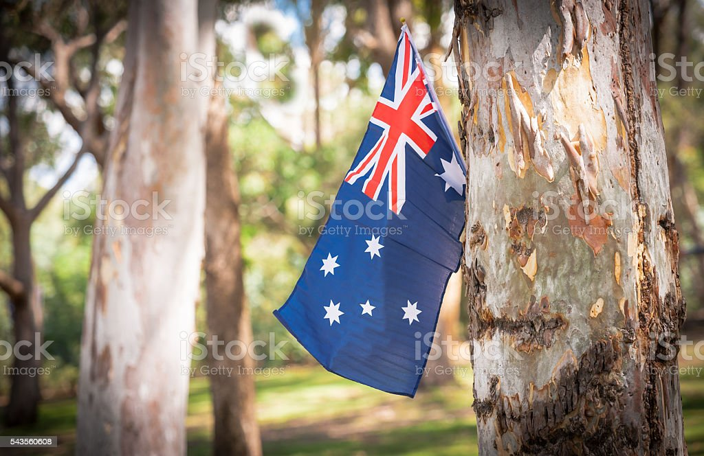 Australian flag on eucalyptus tree in bush stock photo