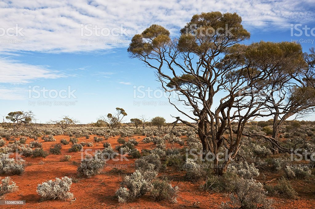 australian landscape royalty-free stock photo