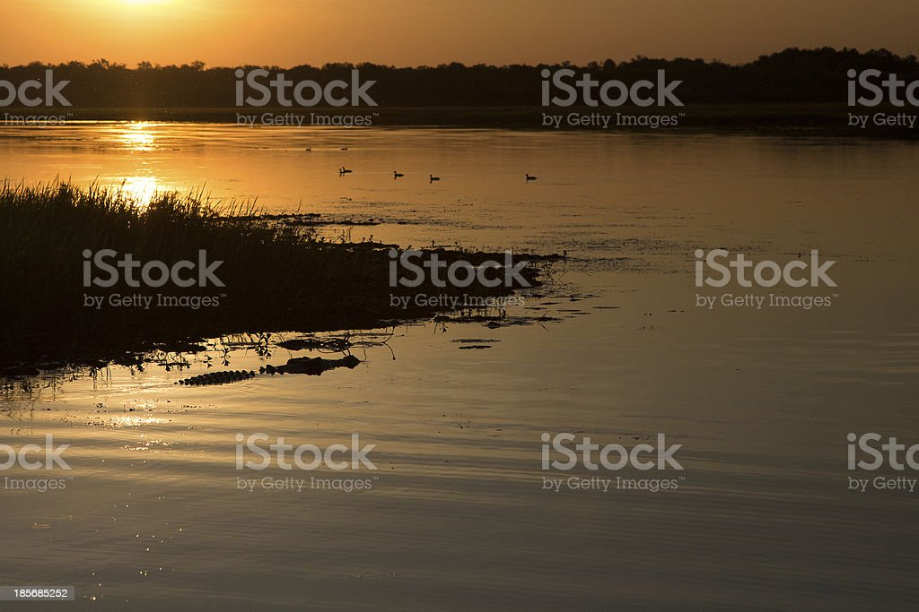 Australian landscape with a crocodile in the water royalty-free stock photo