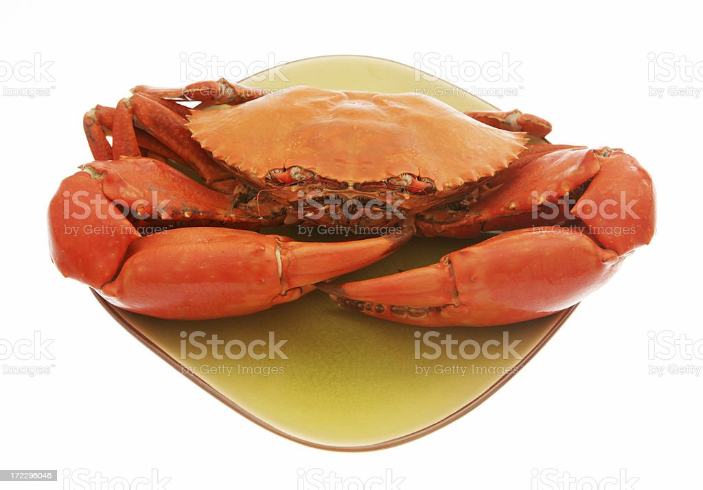 Australian Mud Crab stock photo