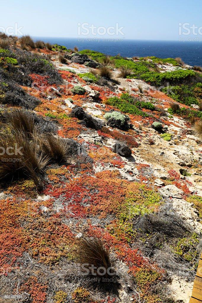 Australian Native flora stock photo