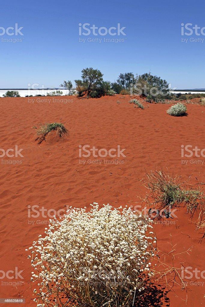 Australian Outback Landscape royalty-free stock photo