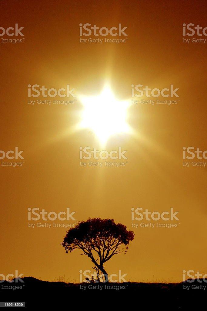 Australian Outback: The Last Tree royalty-free stock photo