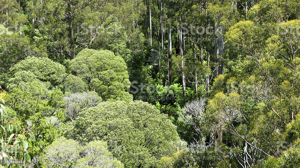 australian rain forest seen from above royalty-free stock photo