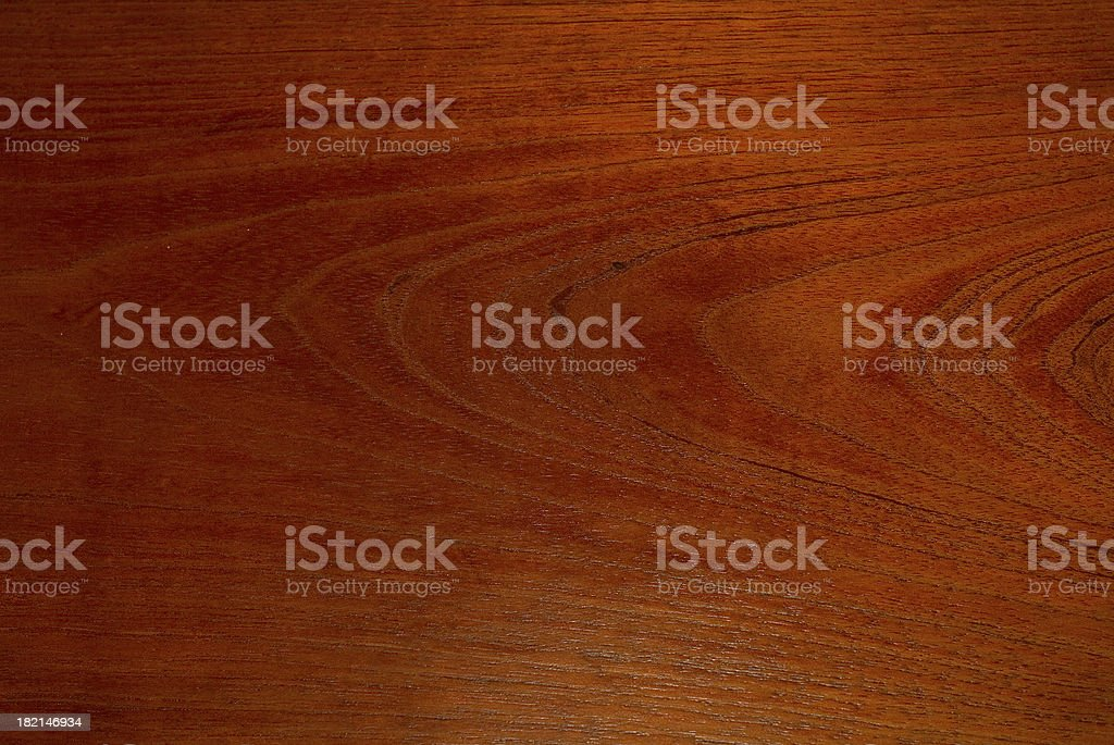 Australian  rainforest timber 2 royalty-free stock photo