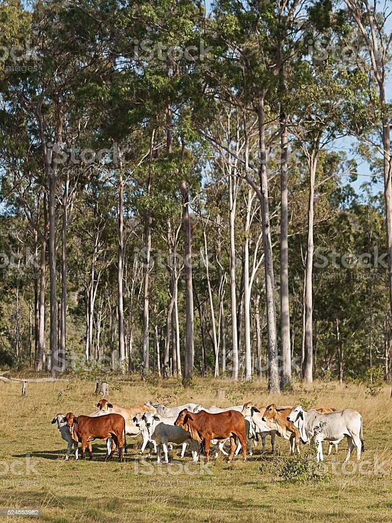 Australian rural country scene stock photo