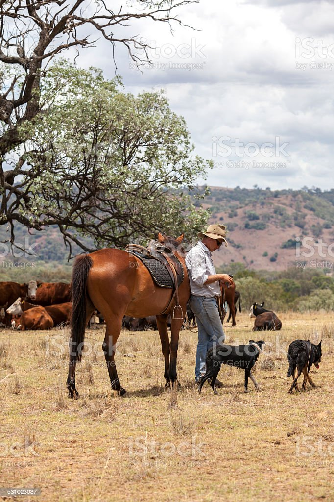 Australian Stockman with horse and dogs stock photo
