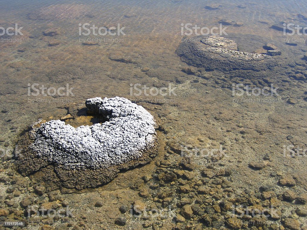 Australian Stromatelites stock photo