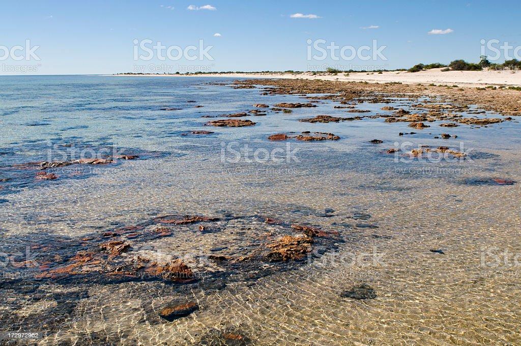 Australian Stromatolites stock photo