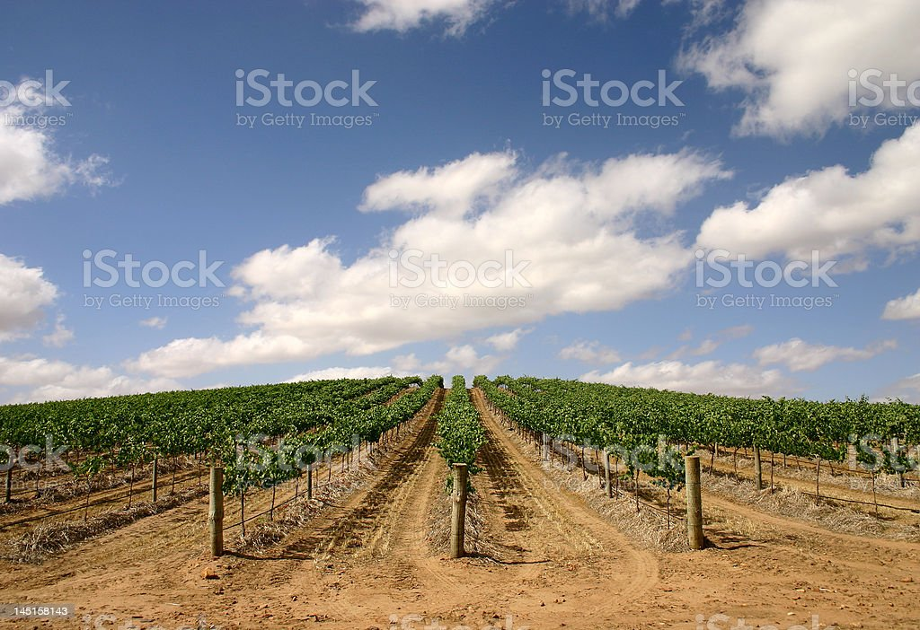 Australian vineyard - wider view royalty-free stock photo