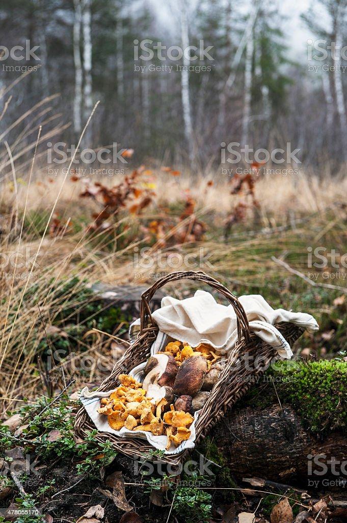 Austria, forest, mushrooms in basket stock photo