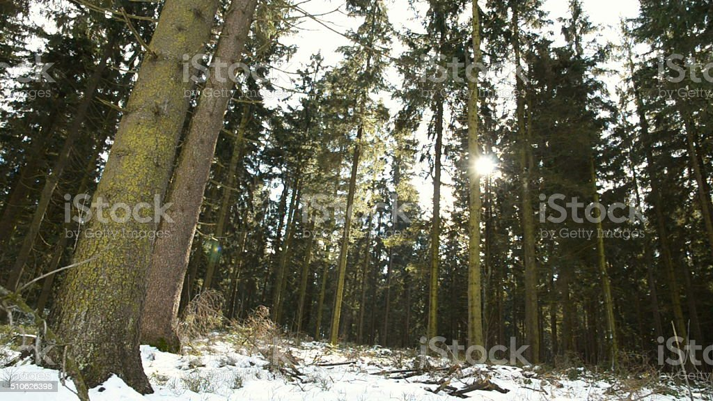 Austrian Forest in Winter stock photo