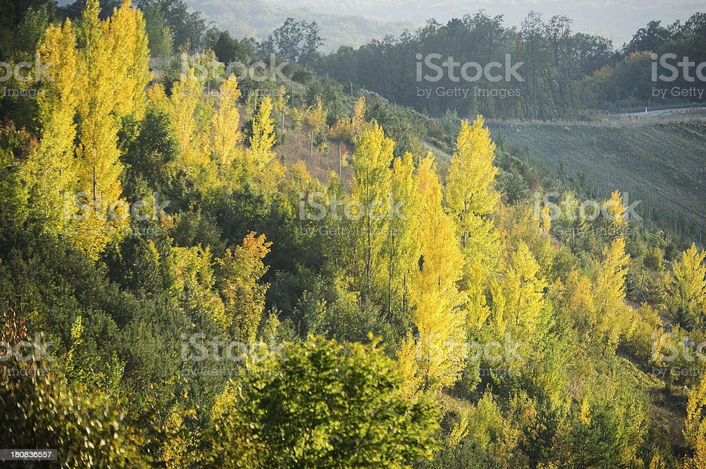 Austrian Mixed Forest in Autumn royalty-free stock photo