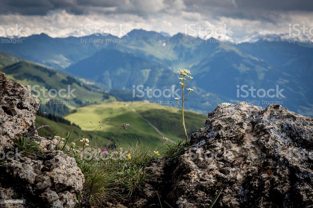 Austrian mountains royalty-free stock photo