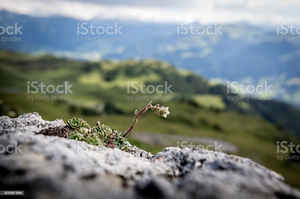 Austrian mountains stock photo