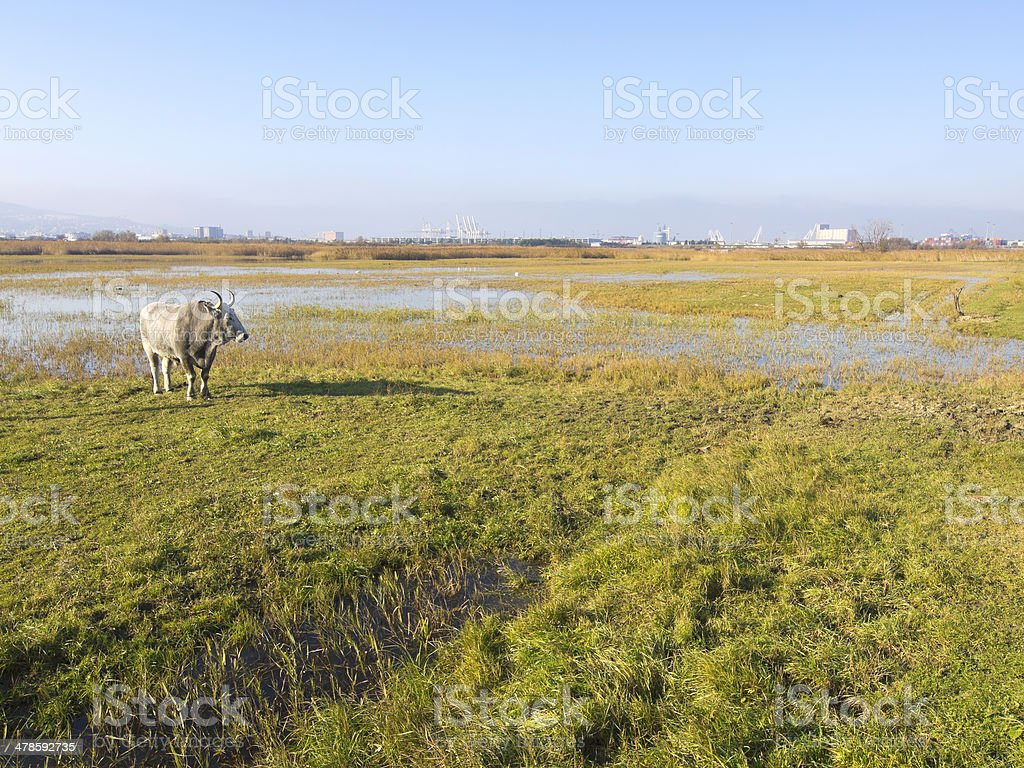 Authentic environment royalty-free stock photo