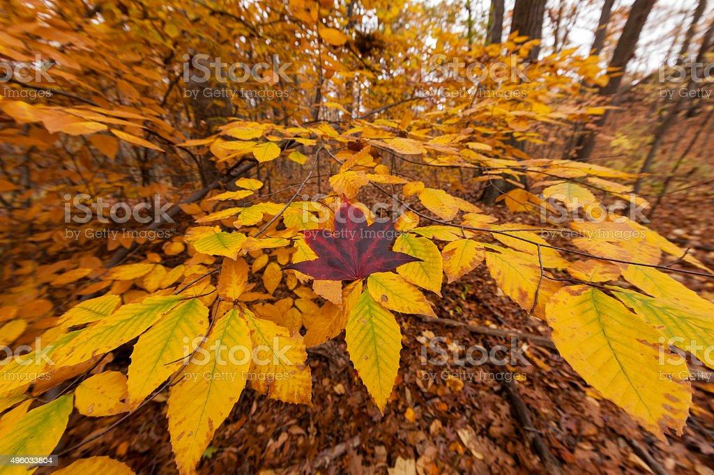Autmn foliage stock photo
