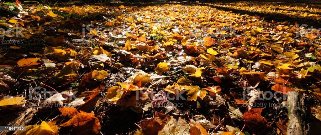 Autmn Forest Floor stock photo