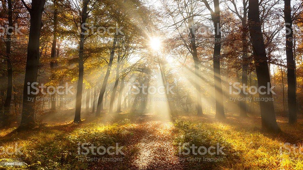 Autmn forest sun stock photo