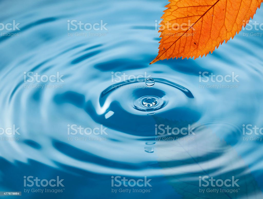 Autmn leaf above the water stock photo