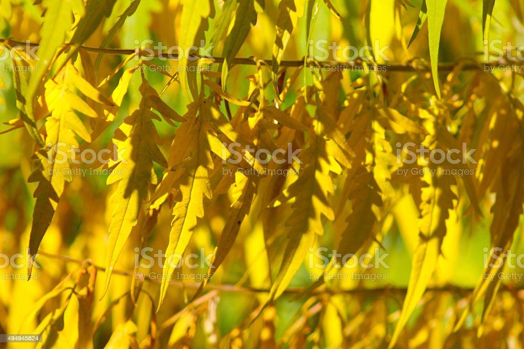 autmn leaf stock photo