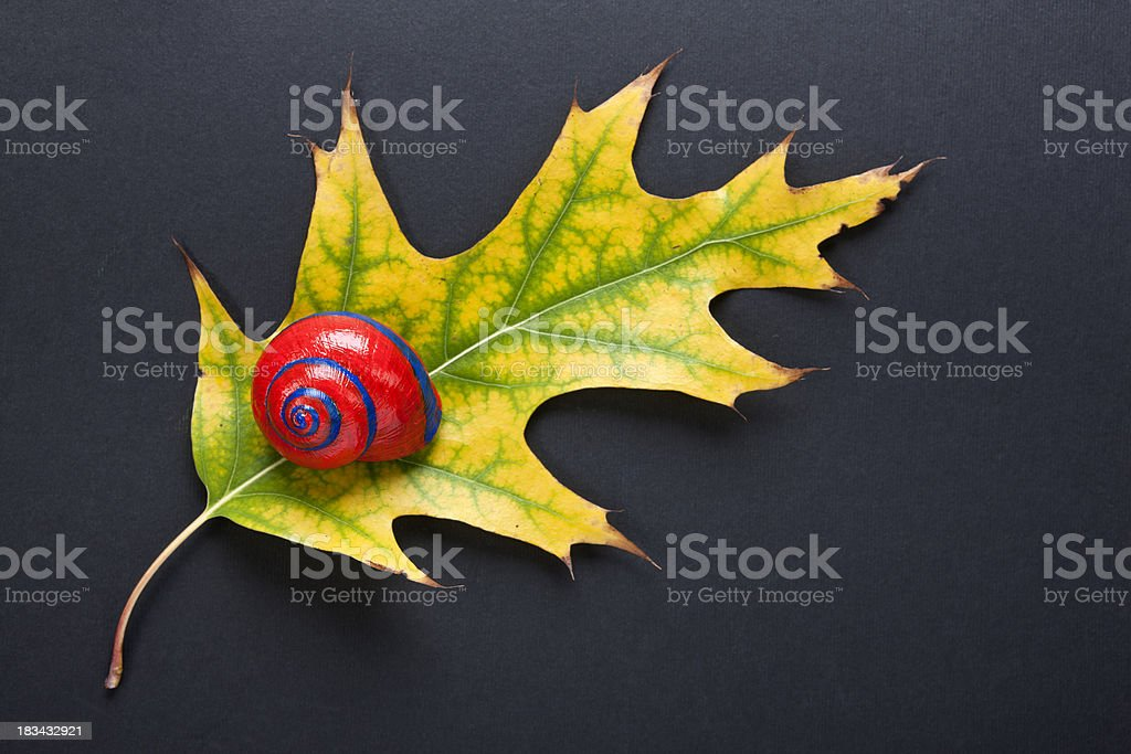 Autmn Leaf with Red Snail stock photo