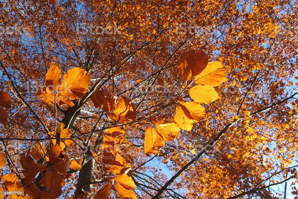 Autmn leaves stock photo
