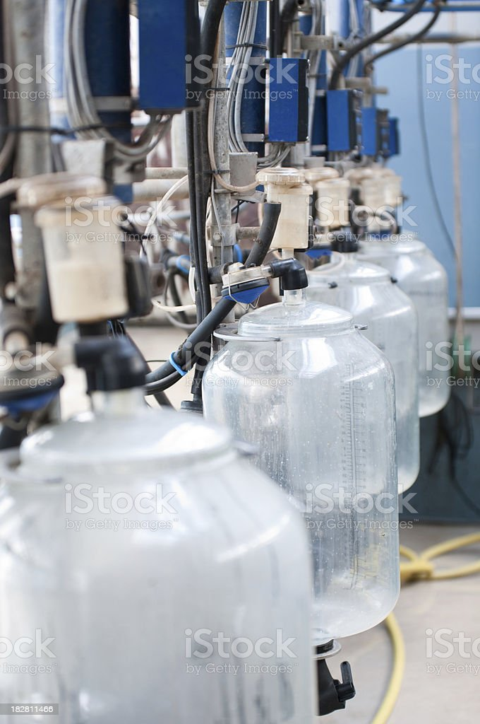 Automated milking system royalty-free stock photo