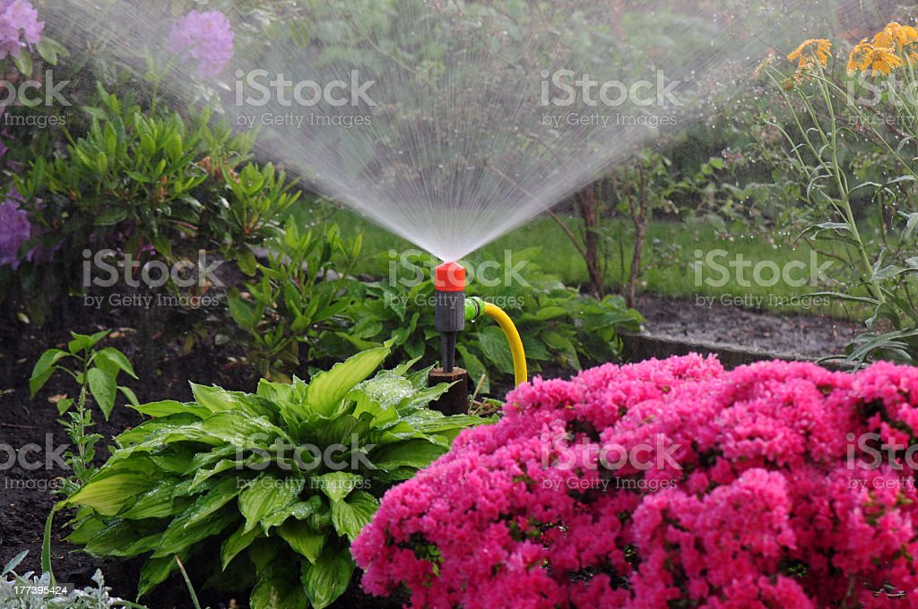 Automated watering system working in the garden stock photo