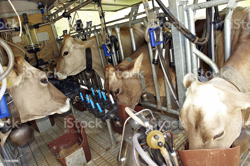 Automatic Milking Station stock photo