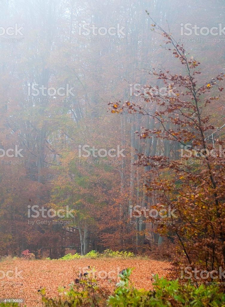 automne en forêt stock photo