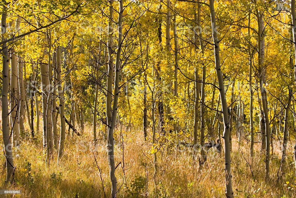 Autum Color on Kenosha Pass Colorado royalty-free stock photo