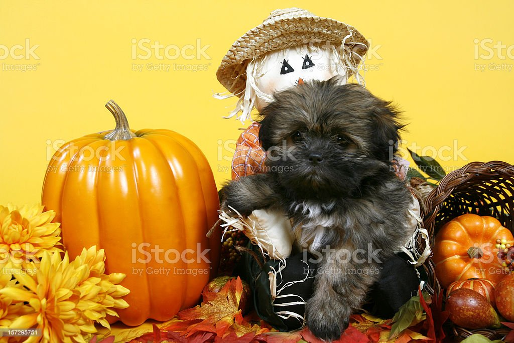 Autum Cutie royalty-free stock photo