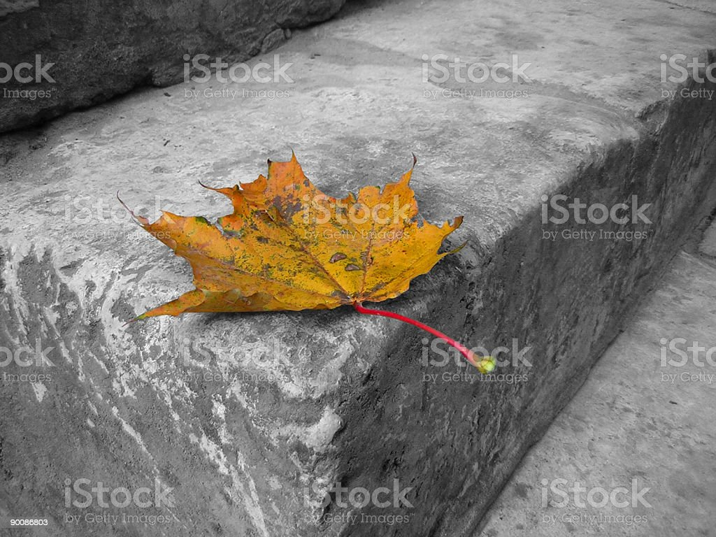 autum leaf royalty-free stock photo