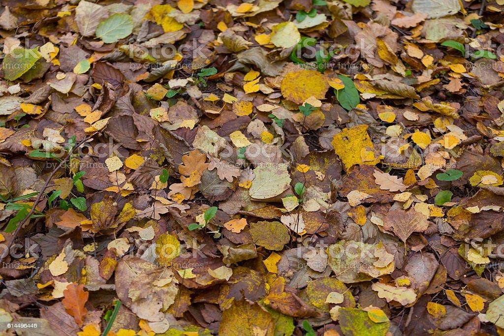 Autum leaves background stock photo