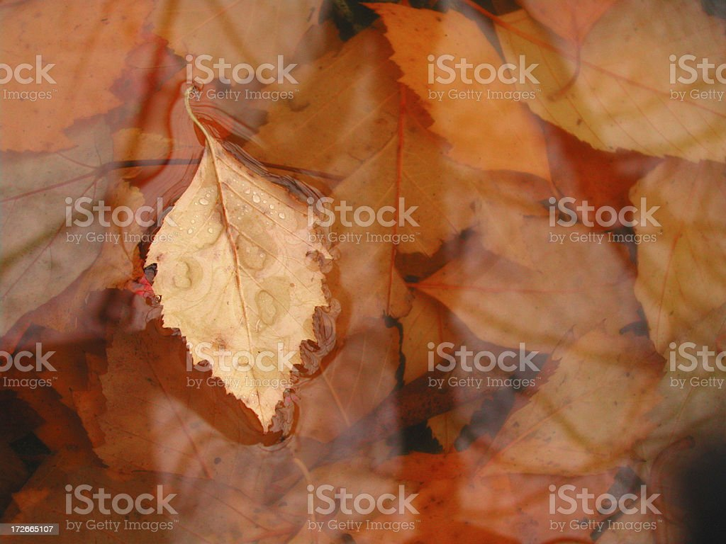 Autum Leaves royalty-free stock photo