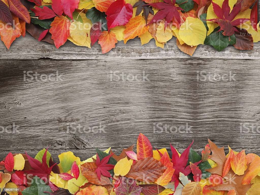 autum leaves with wooden background royalty-free stock photo