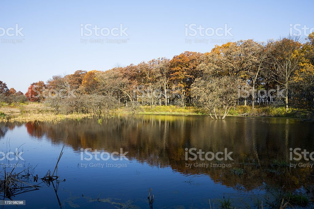 Autum Trees and Lake in the Midwest stock photo