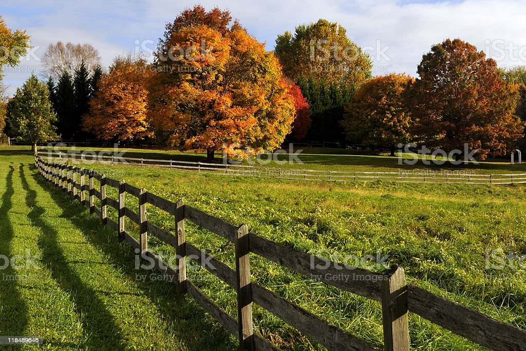 Autum trees in a meadow stock photo