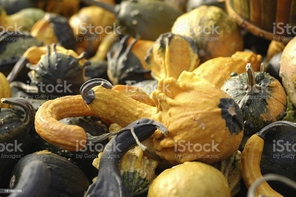 Autum vegies royalty-free stock photo