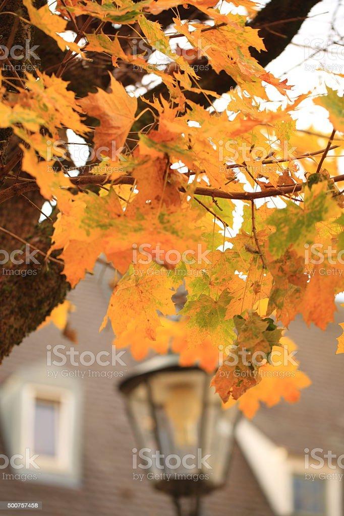 Autumm in the Neighborhood stock photo