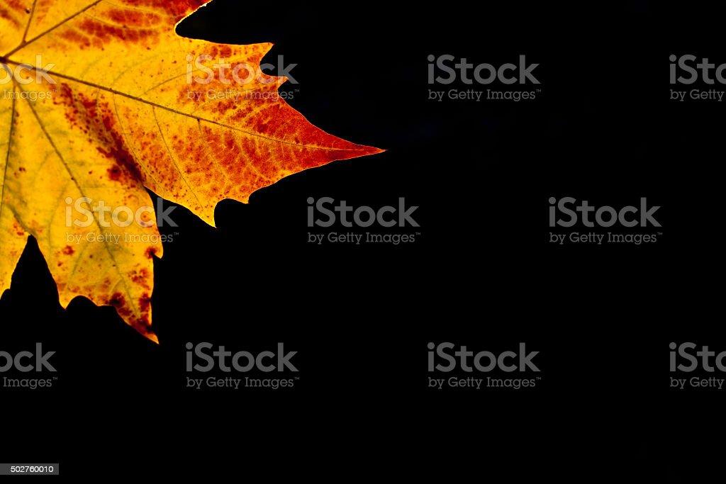 Autumm leaf stock photo