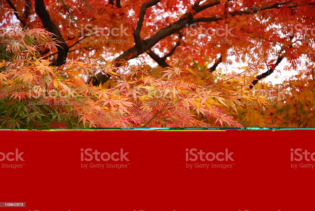 autumm leaves stock photo
