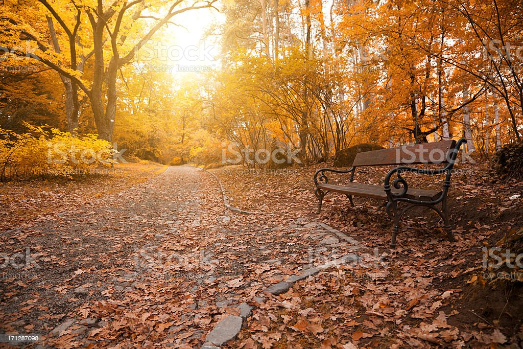 Autumn a park bench in Hungary stock photo